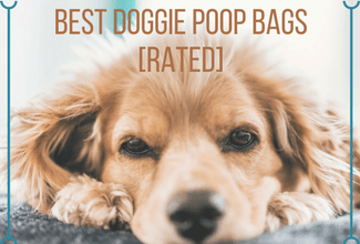 Best Dog Poop Bags for the Environment [Rated]