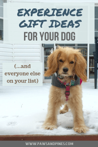 A dog standing in snow waiting for a holiday gift with text overlay: Experience Gift Ideas for Your Dog