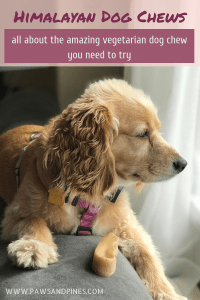 Dog looking out the window with a Himalayan dog chew with text overlay: Himalayan dog chew: all about the vegetarian dog chew you need to try