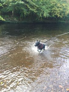 Marley having a good splash