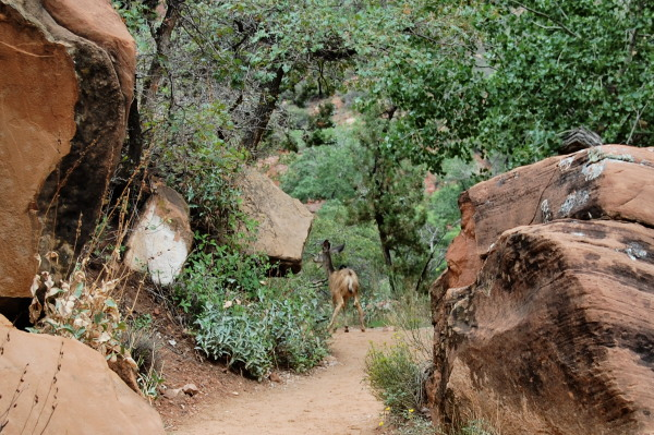 spotting wildlife in Zion National park