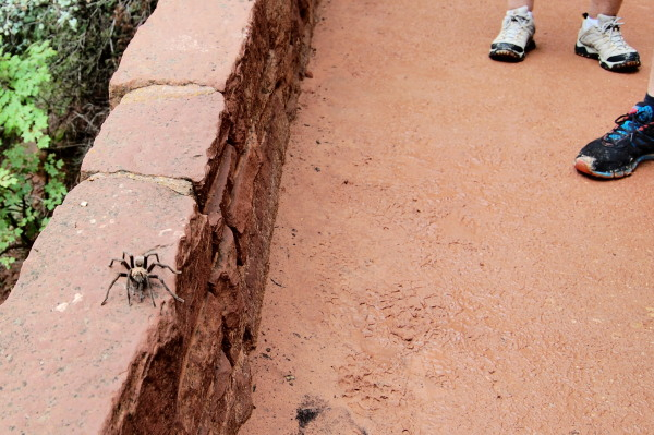 spiders in Zion National Park