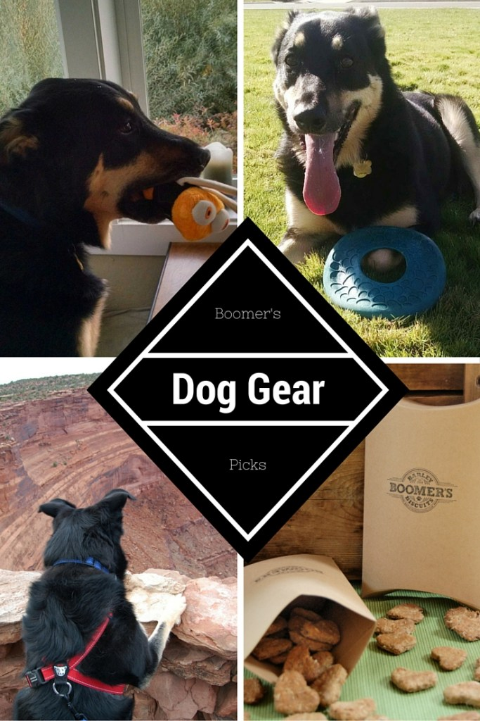 Dog Gear Picks