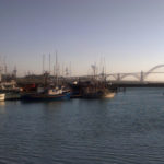 Your Dog-Friendly Check List For Newport Oregon