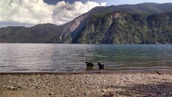 Dog-Friendly Hikes In North Idaho You And Your Dog Should Do Part 2