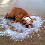 Dog-Tips-And-Tricks-For-Summer-Picture-With-Ice-Cube