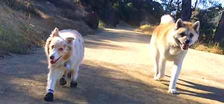 Sophie Milo Dog Running