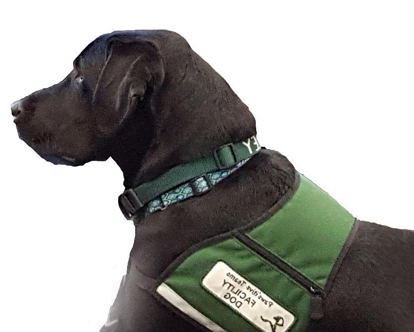 Service Dog Public Access