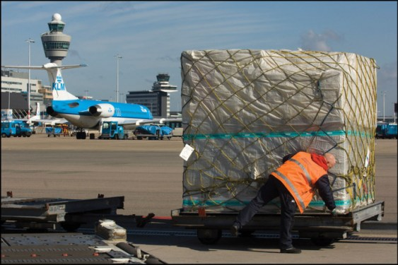 Schiphol Cargo posts solid year after 5 months of growth