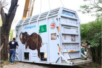 DHL relocates world's loneliest elephant