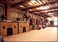 vielle-cave-cognac