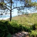 Sentier_du_litoral_escaliers-pays-basque