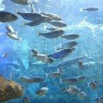 aquarium-de-donostia-san-sebastian-pays-basque-pais-vasco-poissons