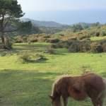 hondarribia-ville-frontaliere-pays-basque-vue-mer-arbres