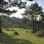 hondarribia-ville-frontaliere-pays-basque-vue-mer-foret