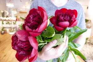 berry-les-fleurs-biarrotes-pays-basque-shopping-biarritz-fleurs