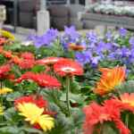jardinerie-endanea-espace-fleuri-fontarrabie-pays-basque-pais-vasco