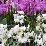 jardinerie-endanea-espace-fleuri-fontarrabie-pays-basque