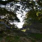 le-mont-adarra-balade-randonnee-pays-basque-sous-les-arbres