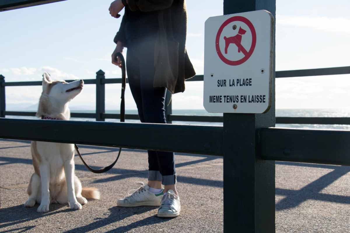 se-balader-avec-son-chien-du-pays-basque