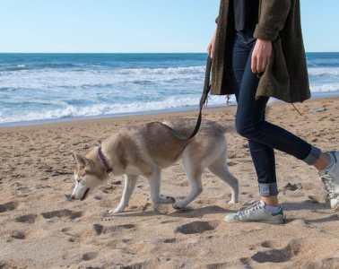 se-balader-avec-son-chien-pays-basque