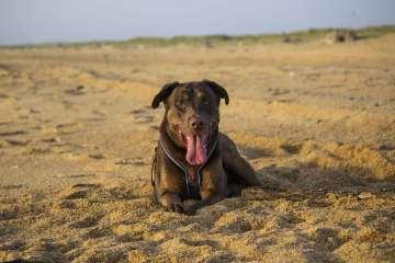 plage pays basque chien