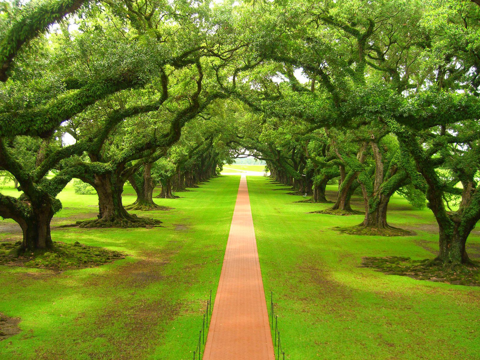 Imagenes De Paisajes Paisajes 1jpg Paz De Selva Verde - Imagenes-de-paisajes