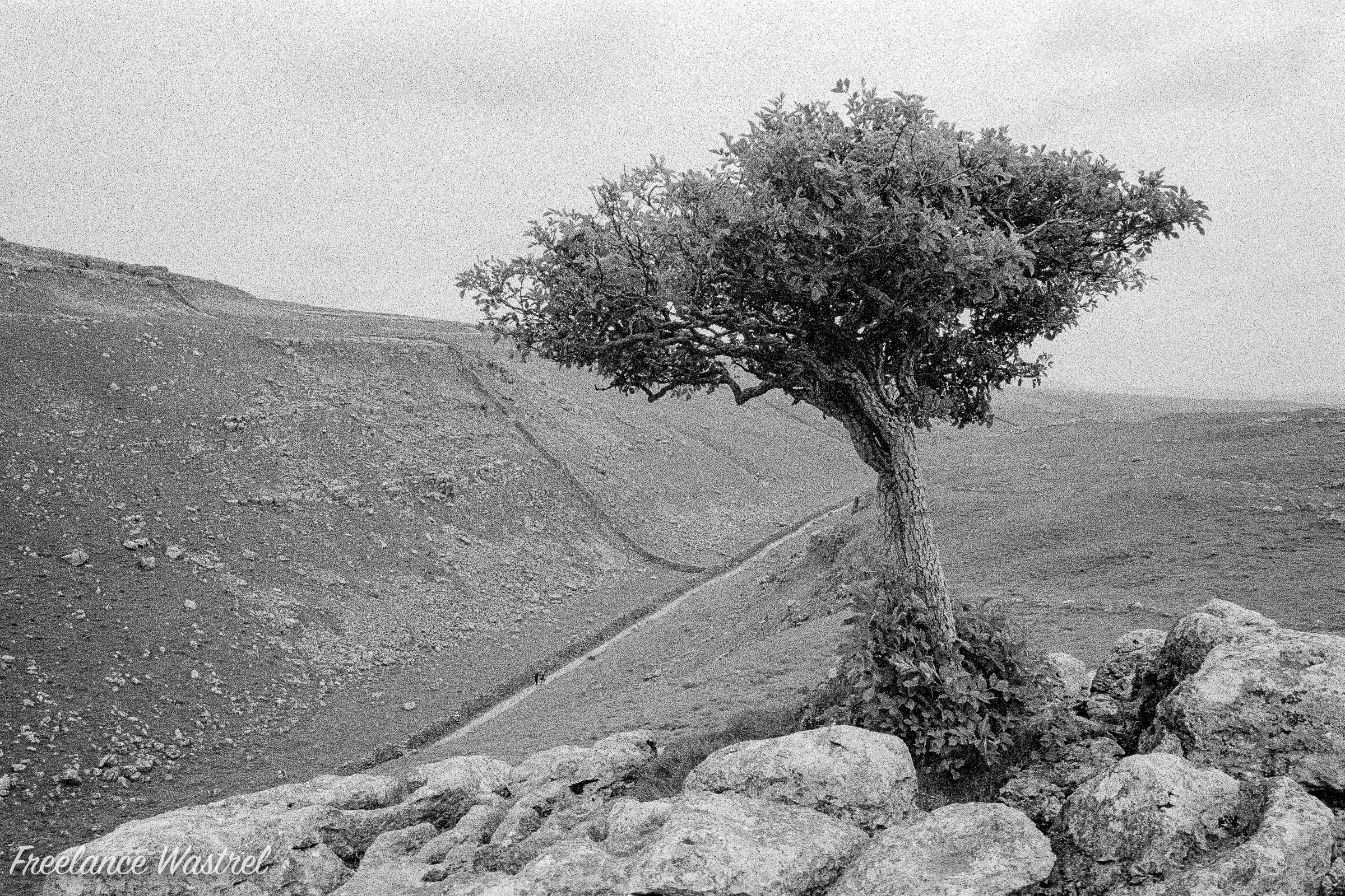 Lone tree, Yorkshire Dales