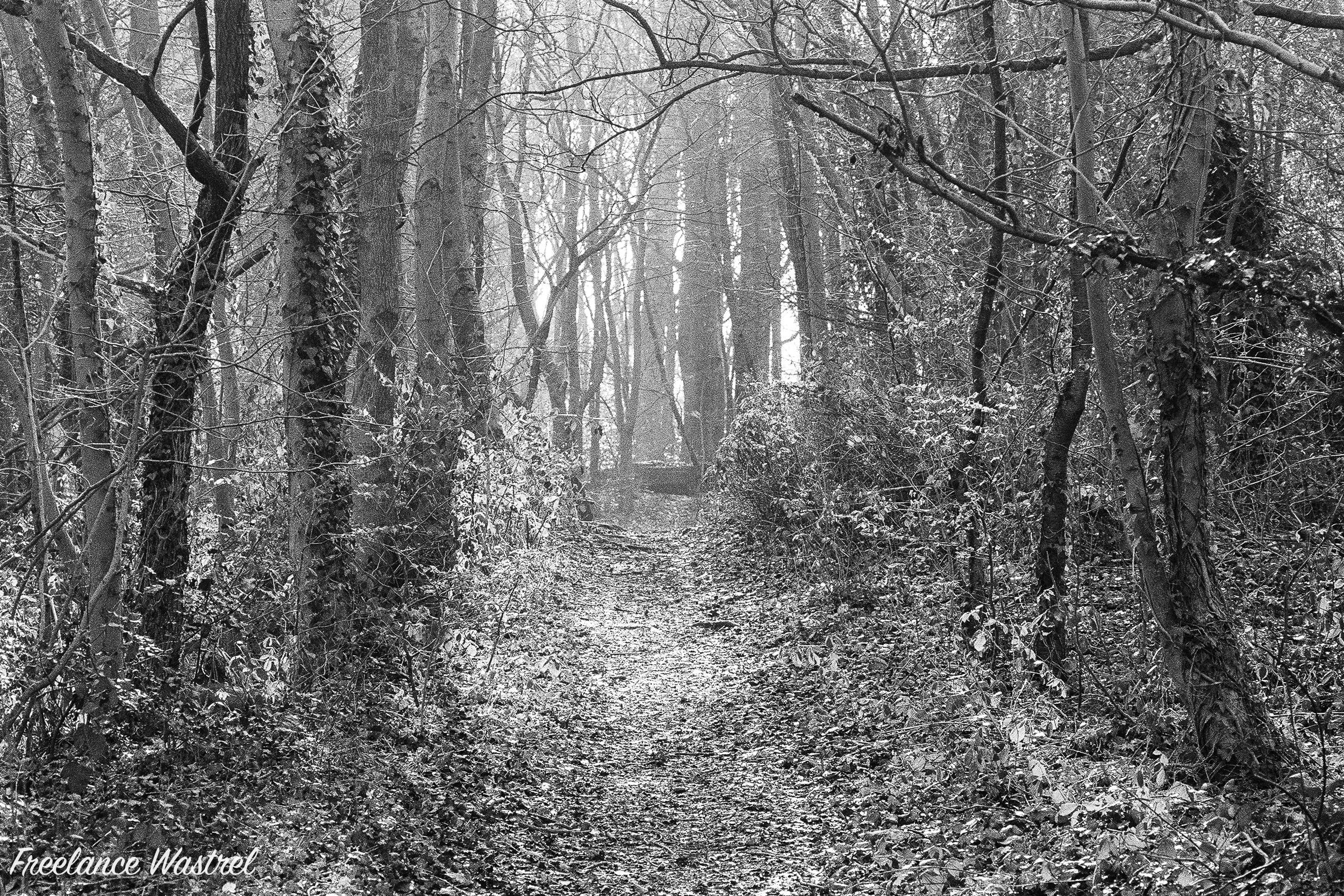 Woodland path, February 2019