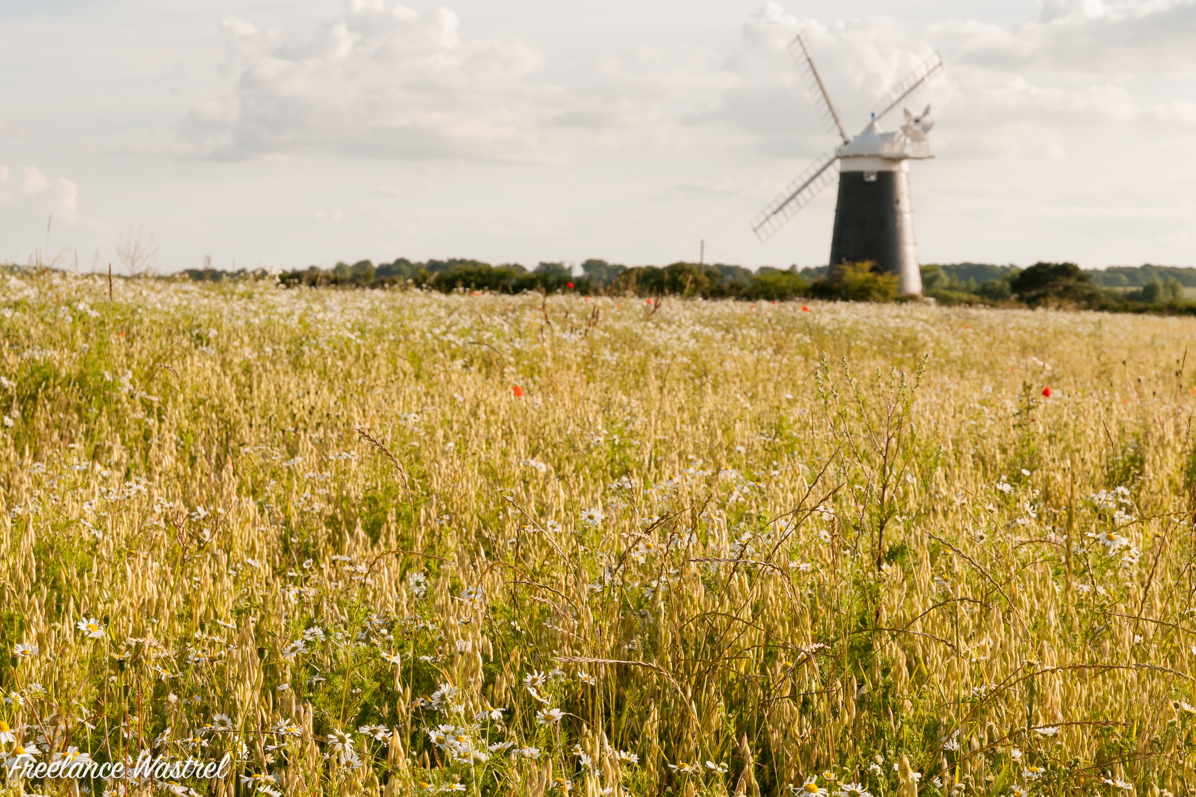 Burnham Overy Staithe Windmill, July 2009