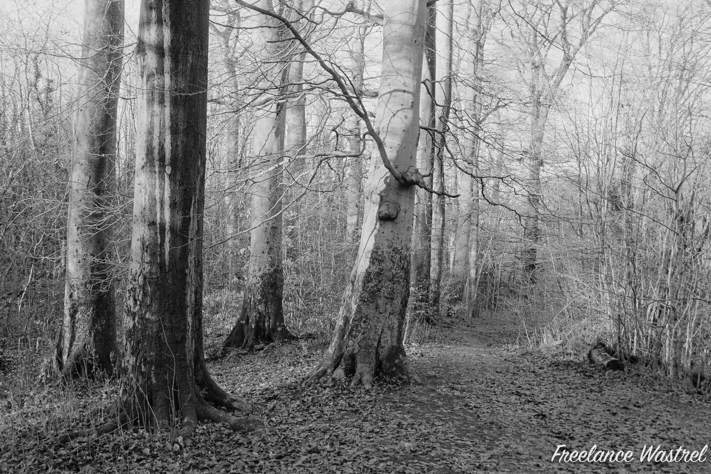 Carr Wood, January 2021