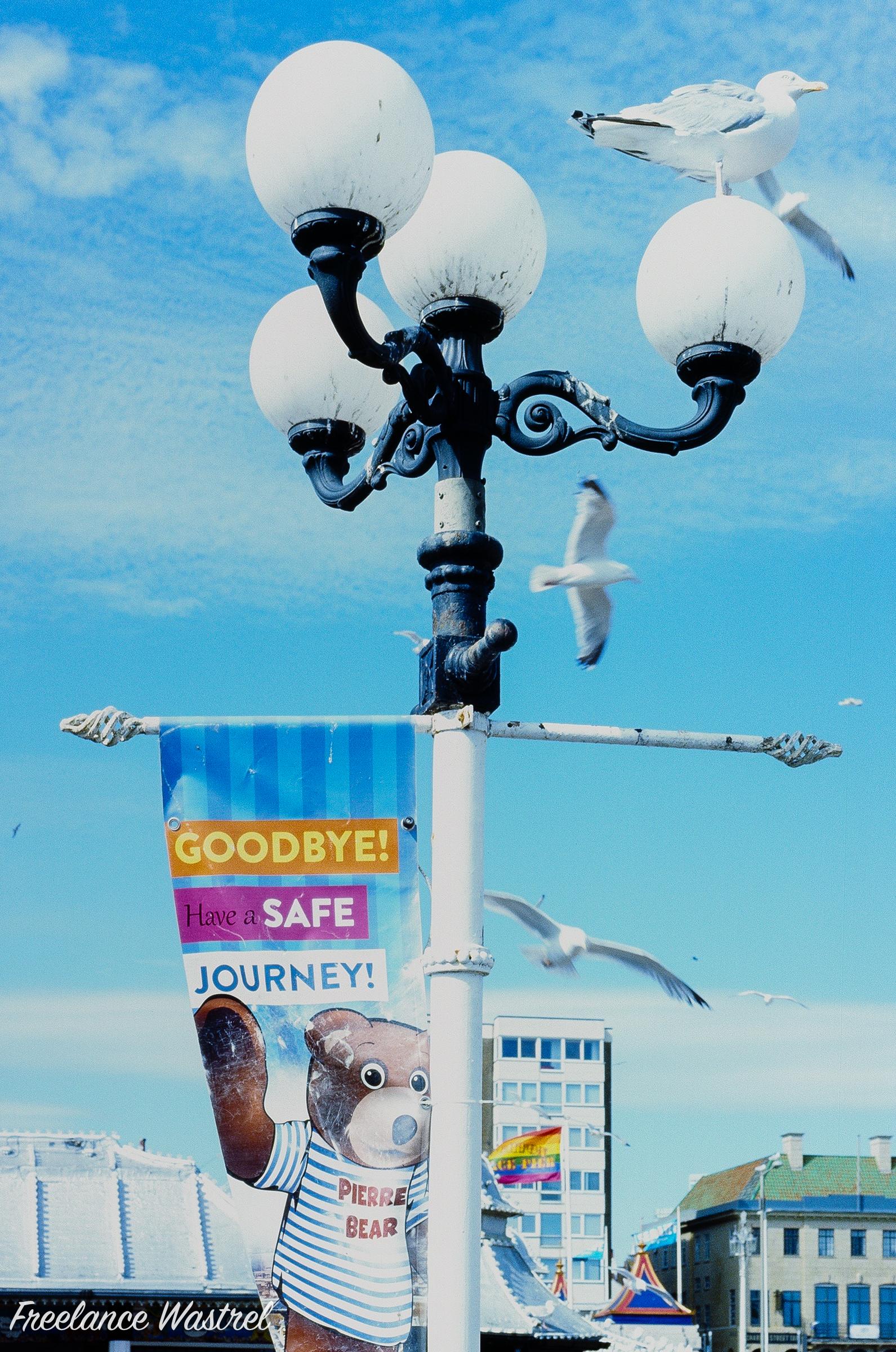 Gulls, Brighton Pier