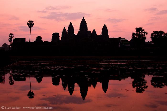 Ankor Wat Skyline
