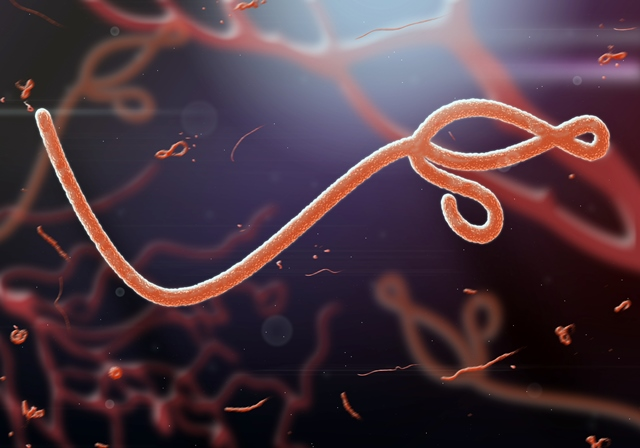 Ebola breakthrough as scientists identify potential therapy