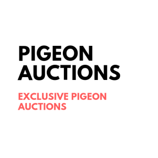 Pigeon Auctions