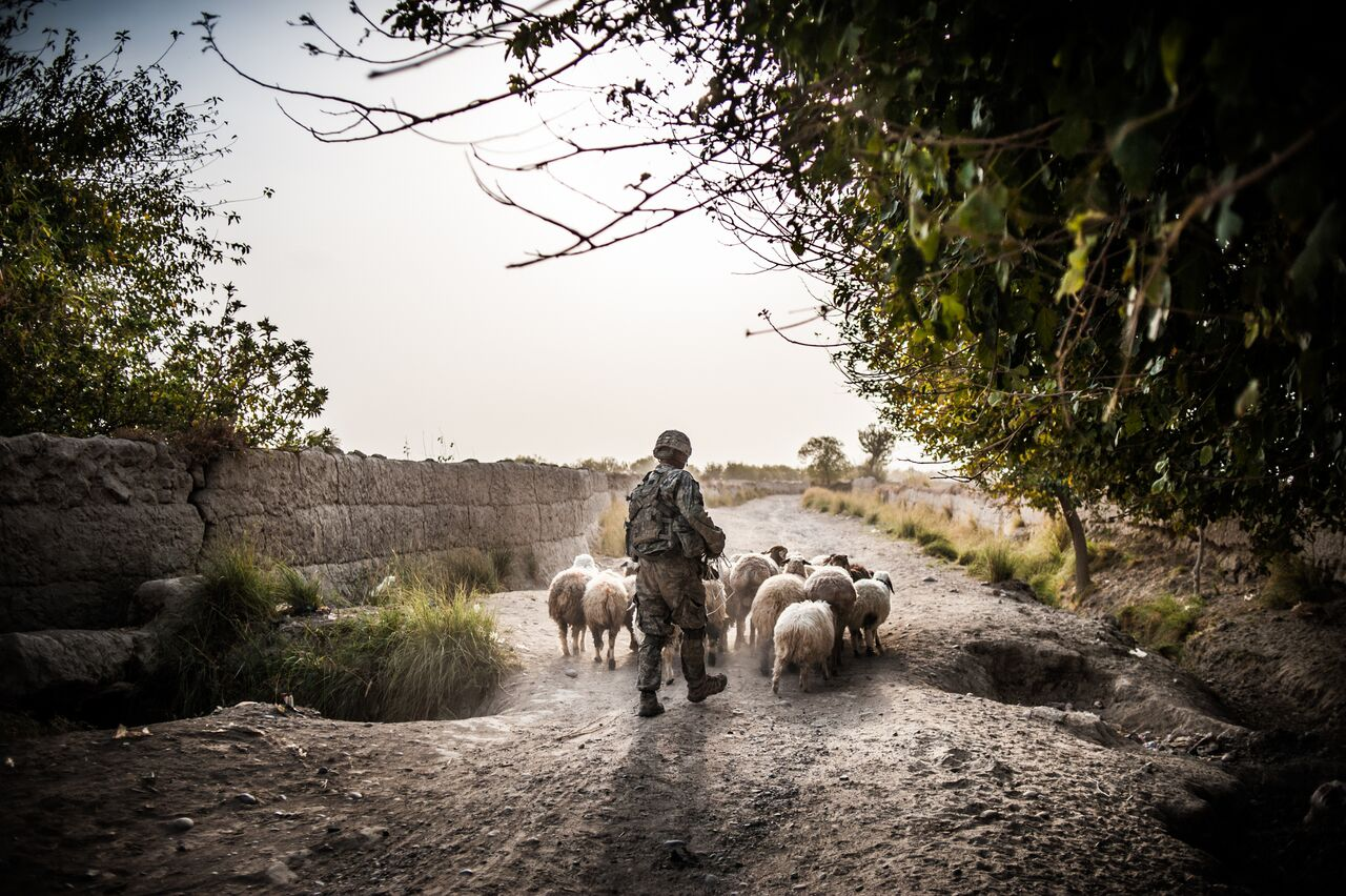 Before destroying a roadside bomb in Panjwayi, southern Afghanistan, 1st Sgt. David Fiske chases sheep away from the blast area. Photo by Ben Brody/The GroundTruth Project