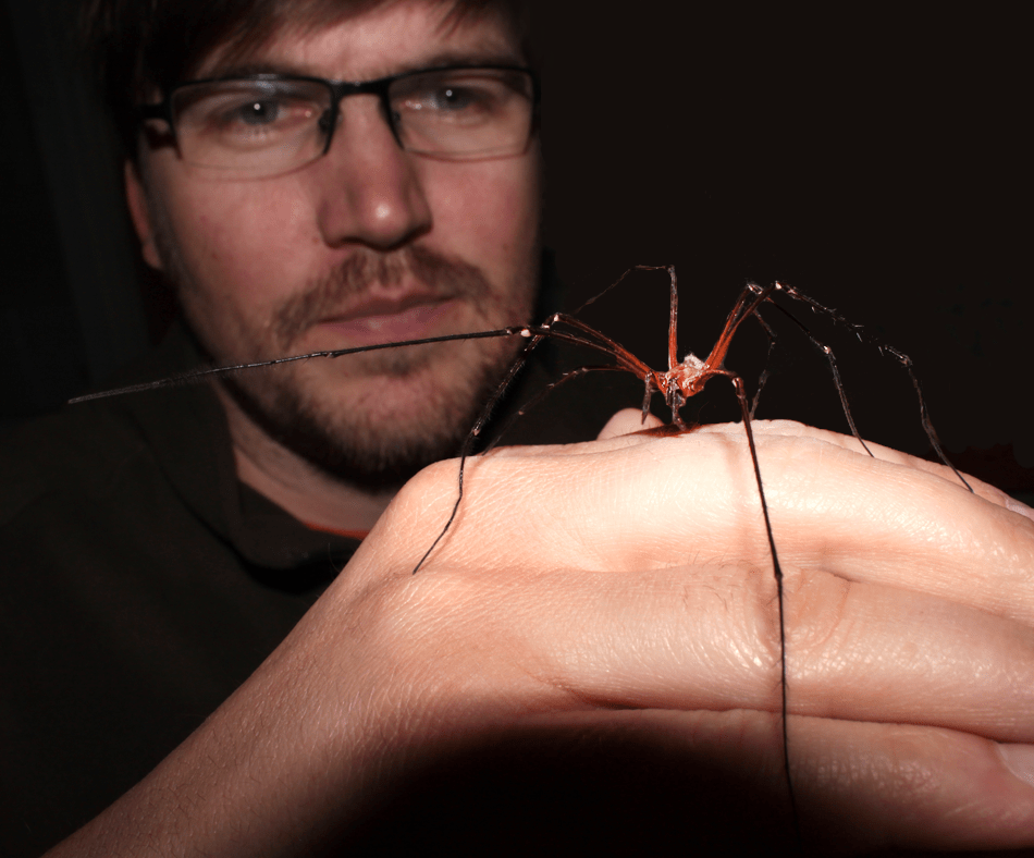 Tasmanian cave spider on the hand of biologist Peter Michalik of the University of Greifswald, Germany Photo by Christian Wirkner.