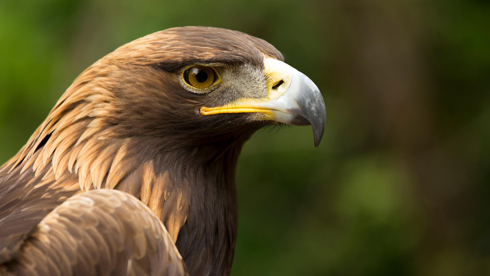 Eagle Power Nova Pbs