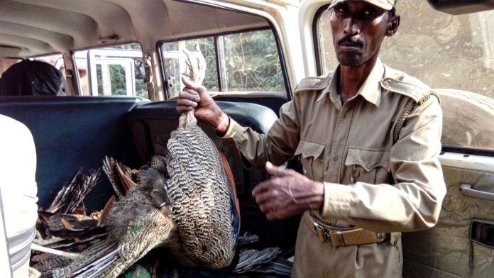 deaths of birds including 25 peacocks in Khurda forest