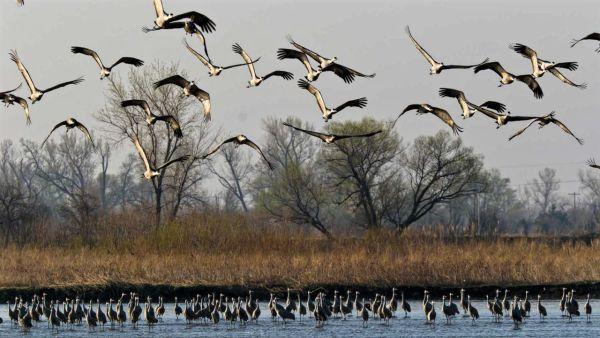 world's migratory bird facing difficulties