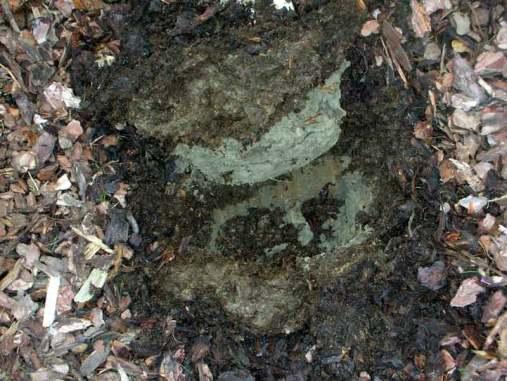 Poor soil in Oxshott