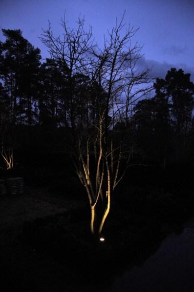 Lighting for tree