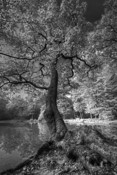 atmosphere_marchand_didier_noire-foret