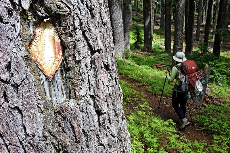 pct-pacific-crest-trail-hiker-blaze-forest-oregon-pctoregon.com