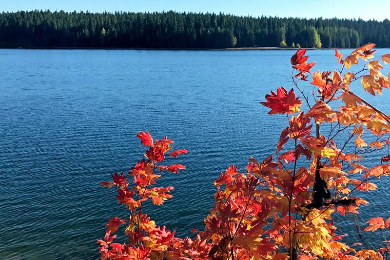 timothy fall