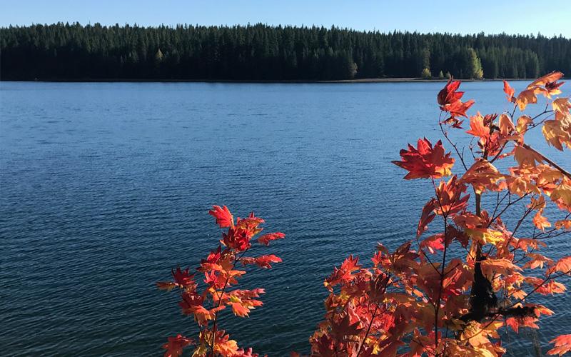 timothy lake mount hood national forest oregon