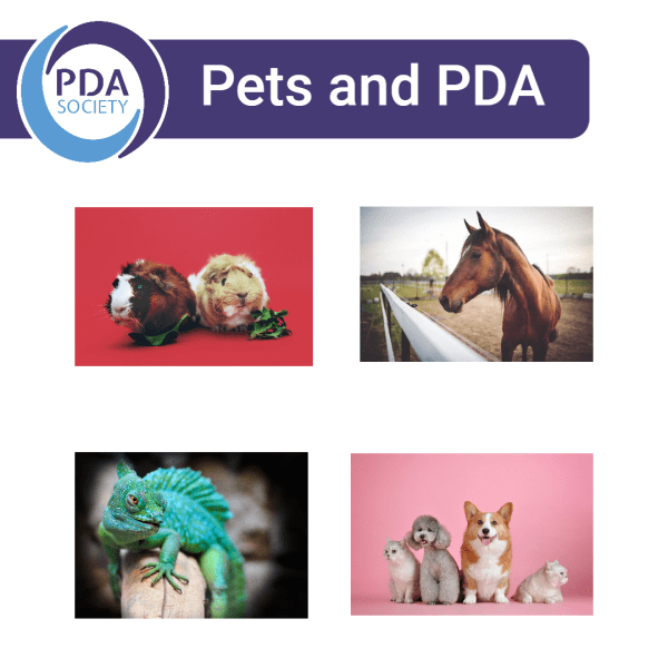 Pets and PDA
