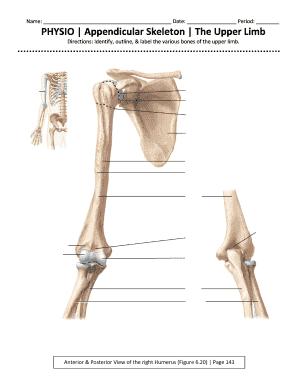 Appendicular Skeleton Worksheet