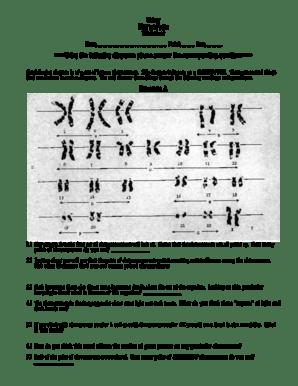 6 Karyotype Worksheet Cwk Wp Answers