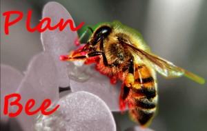 Plan Bee*